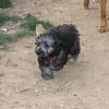 Maia (puppy)_001
