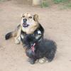 Maia (puppy), Maddie_003