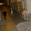 "Maddie and ""co-queen"" & BEST FRIEND Mimi (tan, right) walking home off leash through Valencia Spain with pup (black, left) Fifty. Pretty much every night - back from the dog park."