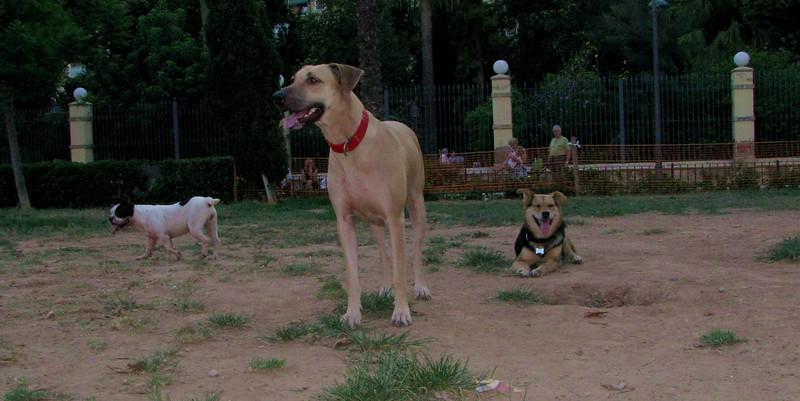 Mimi, Maddie, Kira_001