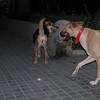 Mimi, Maddie, walk, home, walkhome, ayora, offleash
