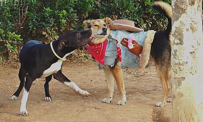 friend; pitbull; maddie; costume; halloween; kiss; portrait; ayora; mommy; puppy