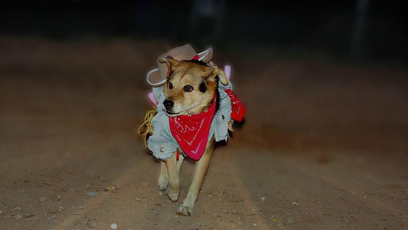 maddie costume ayora halloween cowgirl portrait