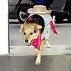 Maddie, walk, halloween, costume, ayora, valencia