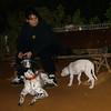 Narco (new pitbull puppy boy)_004