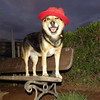 Maddie my red hat