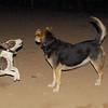Aimar (puppy girl), Maddie_006