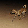 Angus (pup boy)_001