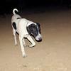 Braco (pup boy)_004