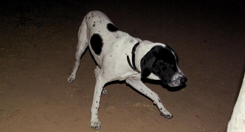 Braco (pup boy)_001