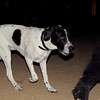 Braco (pup boy)_003
