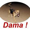 Dama is back 2222