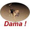 Dama is back 2