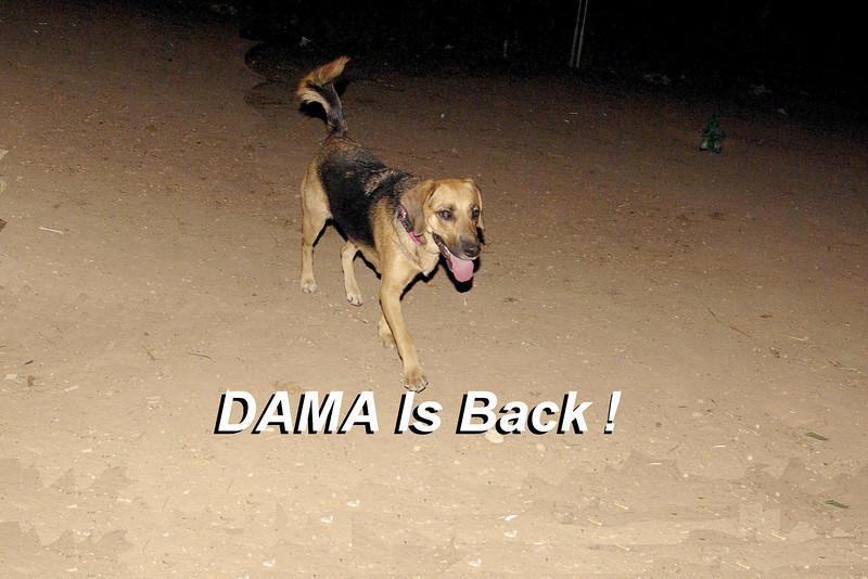 dama Back 55