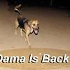 Dama is back