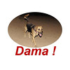 Dama is back 22