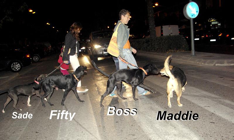 boss maddie fifty sade, ayora, off leash