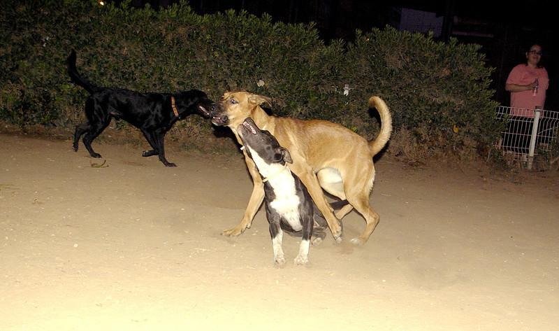 Sade, Catha, pitbull, ayora