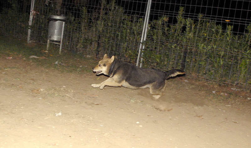 Maddie, run, runs, ayora