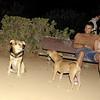 Maddie, mommy, pitbull, puppy, ayora, lola