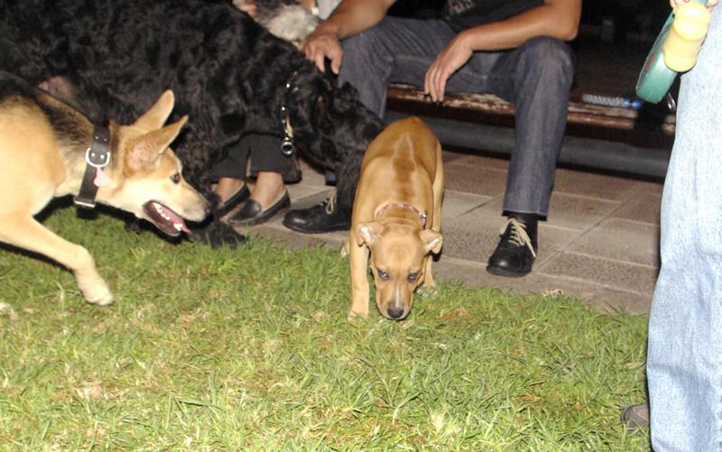Lola, puppy girl_001