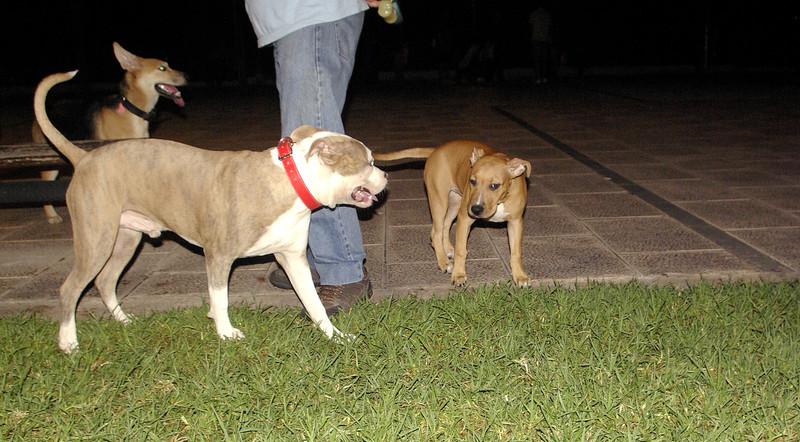 Lola (new puppy), Tiger_001