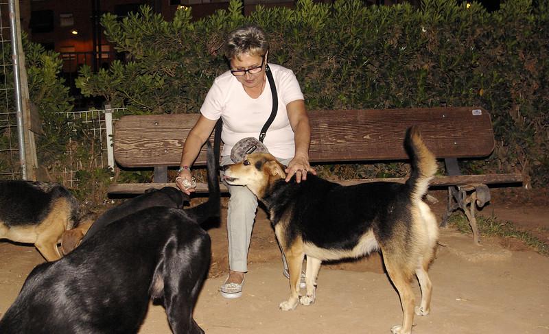 Dama, Maddie, ayora, mommy, puppy