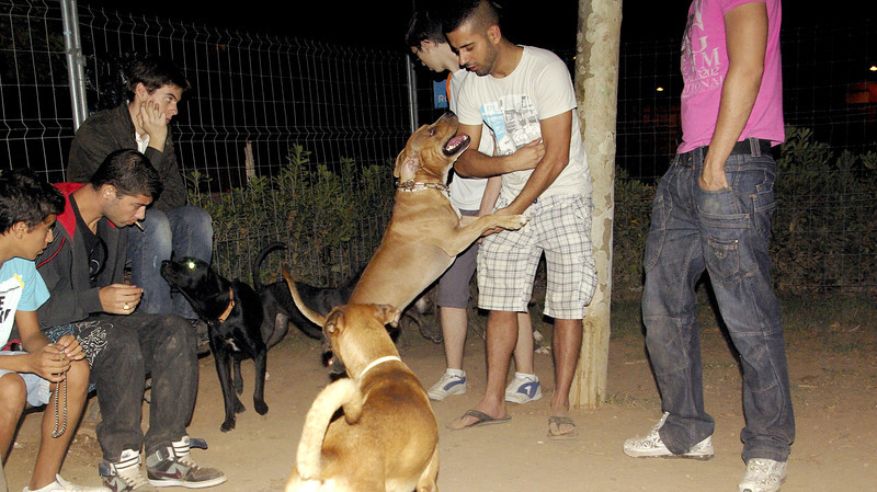 Tyson, oct11, people, owner, ayora, angel, pitbull