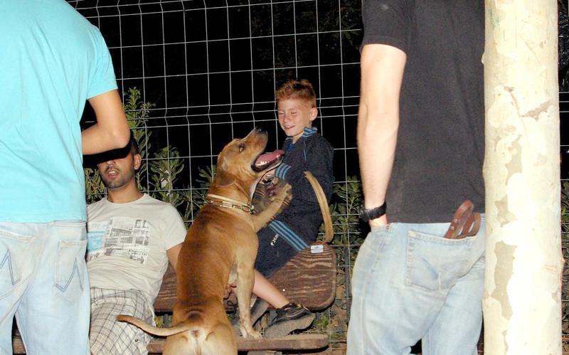 tyson, children, pitbull, ayora