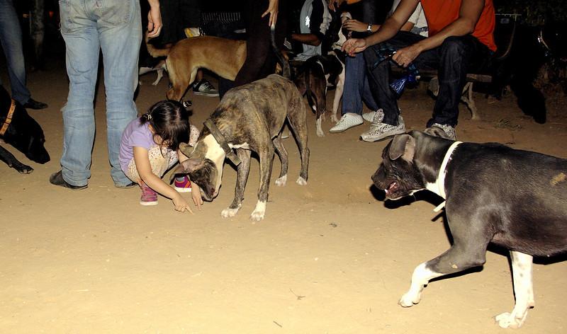 Naya, Laia, Sade, oct12, children, people, pitbull, ayora, naia