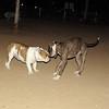 Dana (new bulldog girl), Sade_002