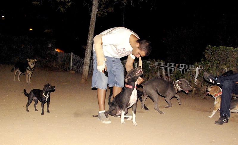 Sade, pitbull, puppy, ayora