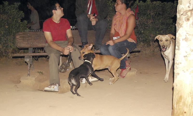 Mora, lola, pitbull, puppy, ayora