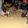 naia, pitbull, ayora, puppy, children, sade