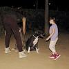 Sade, pitbull, ayora, children