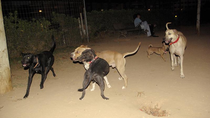 Tyson, Sade, pitbull, puppy, ayora , mimi, fifty