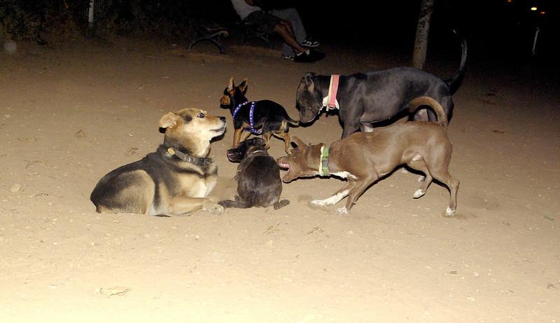 Maddie, mommy, puppy, mora, marron, sade, ayora