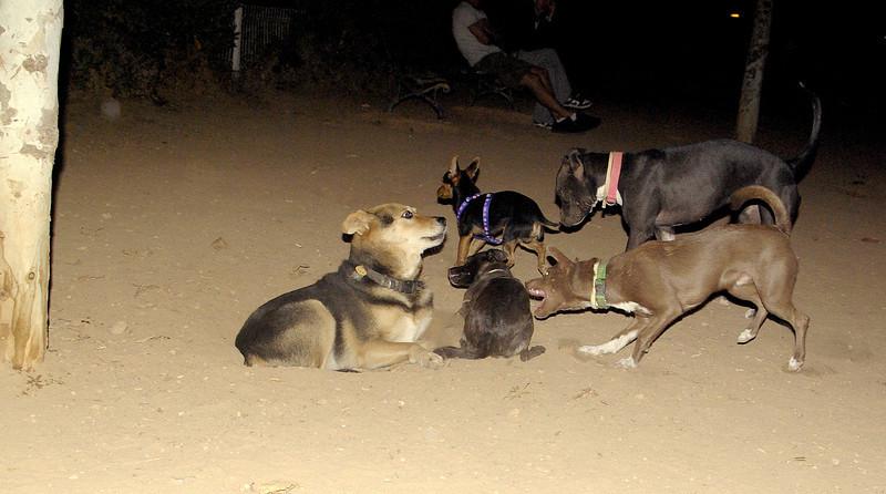 Maddie, mommy, ayora, puppy, mora, marron