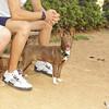 Marron (new puppy boy)_001