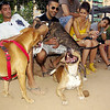 axel, tyson, laugh, pitbull, ayora, people, jorge, angel, owner