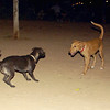 Joya (new puppy girl), Mora_004