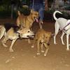 Carnela, Kira, Betty, Byron_001