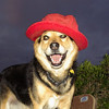 Maddie my red hat