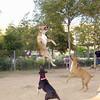 tyson jumps