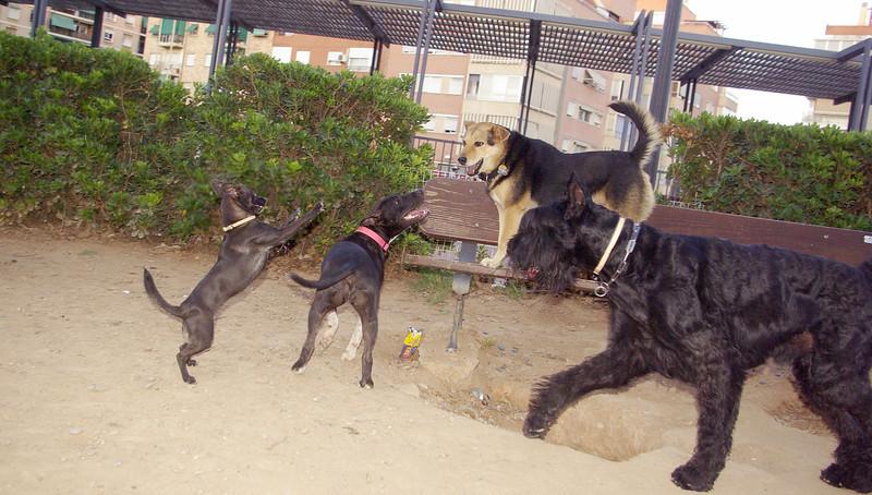 Maddie, Sade, Mora, Inigo_001