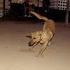 Obi (pup boy)_001
