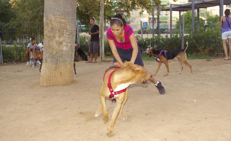 Axel, 001, sept8, pitbull, ayora, people, owner, friend