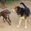 Maddie, puppy no name_001