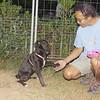 Luna new puppy girl 4 months_001