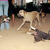 Sade; Naya; Mimi; laugh; pitbull; sister; naia; queen; ayora; maddie